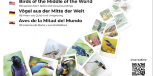 CAP1 HUMMINGBIRDS COVER